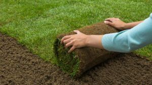 Sod Delivery and Installation